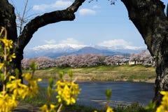 Fiore di ciliegia con il Mt Zao Fotografia Stock Libera da Diritti