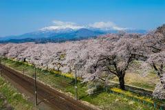 Fiore di ciliegia con il Mt Zao e ferrovia Fotografia Stock