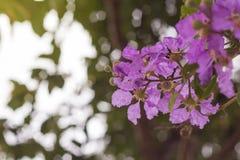 Fiore di ciliegia del paesaggio e sakura Immagine Stock