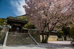 Fiore di ciliegia di fioritura paesaggi della molla del tempio di Okayama nei bei del Giappone Fotografia Stock Libera da Diritti