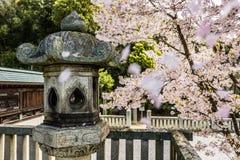 Fiore di ciliegia di fioritura paesaggi della molla del tempio di Okayama nei bei del Giappone Immagini Stock