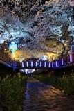 Fiore di ciliegia di Jinhae Immagini Stock Libere da Diritti