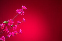 Fiore di ciliegia durante il nuovo anno cinese con fondo rosso Fotografie Stock Libere da Diritti