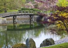 Fiore di ciliegia in giardino giapponese immagini stock libere da diritti