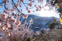 Fiore di ciliegia nella porcellana yunan della vecchia città Immagine Stock Libera da Diritti