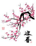 Fiore di ciliegia nella sorgente illustrazione di stock