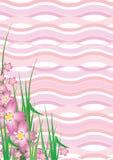 Fiore di ciliegia ondulato Fotografie Stock