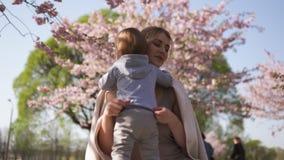 Fiore di ciliegia di Sakura - giovane madre della mamma che si siede con suo figlio del bambino del ragazzino in un parco a Riga, video d archivio
