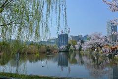 Fiore di ciliegia di Tokyo di viaggio del Giappone in primavera 2018 fotografie stock