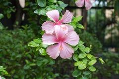 Fiore di colore di orizzontale due Fotografia Stock Libera da Diritti