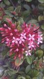 Fiore di colore rosso Fotografie Stock