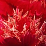 Fiore di colore rosso del fuoco Immagini Stock
