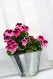 Fiore di Cutie Fotografia Stock