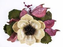 Fiore di Dired Immagine Stock