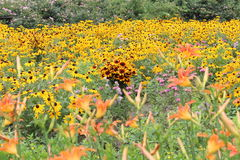 Fiore di estate Immagine Stock Libera da Diritti