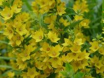 Fiore di estate Fotografie Stock