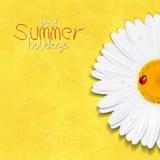 Fiore di estate della margherita Camomilla Migliori vacanze estive Immagine Stock Libera da Diritti