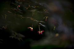 Fiore di farfalla Immagini Stock