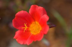 Fiore di fioritura Fotografie Stock