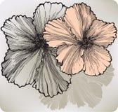 Fiore di fioritura dell'ibisco, a mano disegno Illustrazione di vettore Fotografia Stock Libera da Diritti