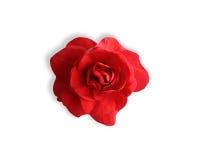 Fiore di fioritura di rosso di impatiens immagini stock libere da diritti