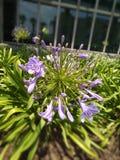 fiore di fioritura nella festa calda immagine stock libera da diritti