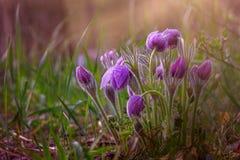 Fiore di fioritura rosa luminoso Splendido è aumentato Fotografia Stock
