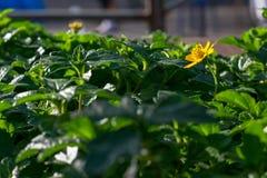 Fiore di Flowera in una città Fotografie Stock