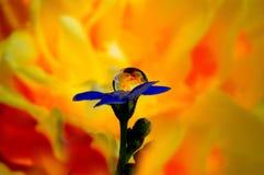 Fiore di fuoco Fotografia Stock Libera da Diritti
