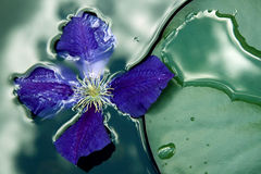 Fiore di galleggiamento Immagini Stock Libere da Diritti