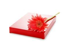 Fiore di Gerber e contenitore di regalo rosso Fotografia Stock