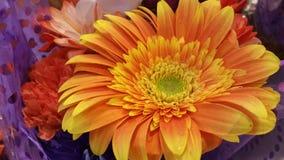 Fiore di giallo arancio circondato dai colori Immagini Stock