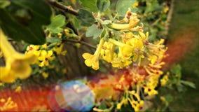 Fiore di giallo del giardino della primavera Immagini Stock Libere da Diritti