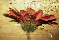 Fiore di Grunge Fotografia Stock