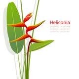 Fiore di Heliconia Fotografia Stock
