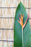 Fiore di Heliconia sul panno di tabella di legno Fotografie Stock Libere da Diritti