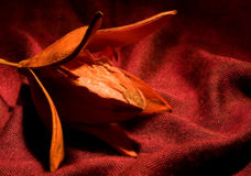 Fiore di Ikebana Fotografie Stock