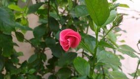 fiore di inverno immagini stock