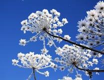 Fiore di inverno fotografie stock libere da diritti