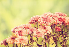 fiore di inverno Fotografia Stock