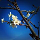 fiore di inverno Fotografia Stock Libera da Diritti