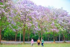 Fiore di Jarul fotografie stock