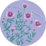 Fiore di Kosmeya Illustrazione di vettore Fotografia Stock