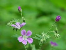 Fiore di legno fotografia stock libera da diritti