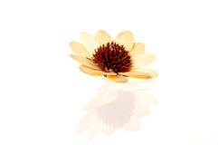 Fiore di legno su fondo bianco Fotografia Stock