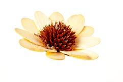Fiore di legno su fondo bianco Immagini Stock
