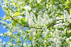 Fiore di legno luminoso Fotografia Stock