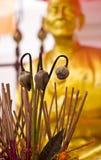 Fiore di loto asciutto Fotografia Stock