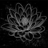 Fiore di loto in bianco e nero dipinto nello stile grafico isolato Fotografia Stock Libera da Diritti