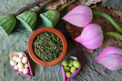 Fiore di loto della raccolta, seme, tè, alimento sano Fotografia Stock Libera da Diritti